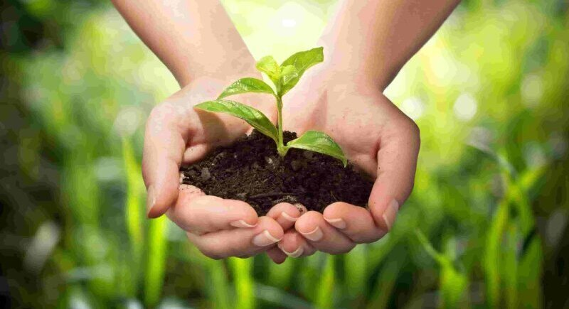 The application for aid for insurance of agricultural products begins image