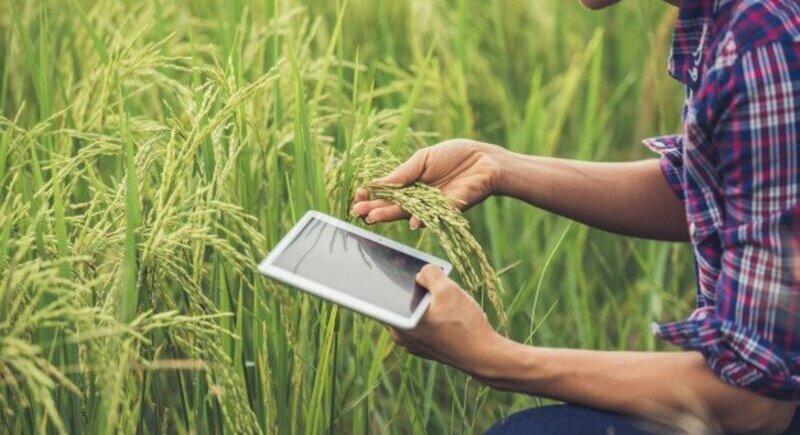 Селскостопанска застраховка - инвестиция или не image