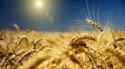 Nearly BGN 1 million for agricultural production insurance paid by the State Fund