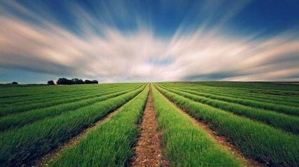 Селскостопанско застраховане - най-важното, което трябва да знаем image