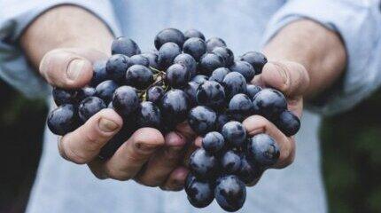 Фонд Земеделие финансира застраховки на реколтата плодове и зеленчуци image