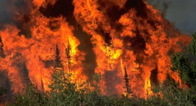 A large fire broke out between the Sofia villages of Chelopechene, Voynegovtsi and Lokorsko image